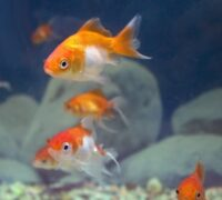 A Comprehensive Guide to Aquarium Fish Keeping