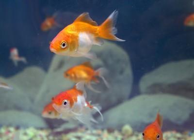 A Comprehensive Guide to Aquarium Fish Keeping