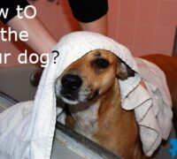 How to Bathe a dog the Right Way