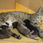 Cat Spaying and Neutering – Benefits