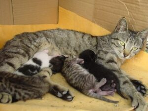 Read more about the article Cat Spaying and Neutering – Benefits