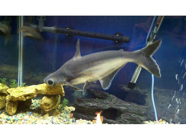 Iridescent aquarium shark