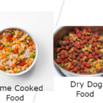 What Should I Feed dog? Best Diet Plan For Your Dog