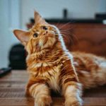 Cat Vaccinations – Everything You Should Know