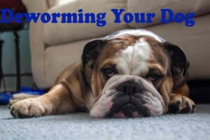 Dogs Deworming – 5 Signs Indicating That Your Dog Needs a Dewormer