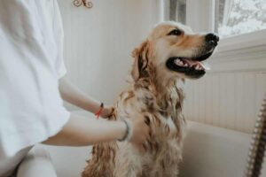 Read more about the article Dog Skin Infection – 3 Ways To Prevent Dog Skin Problems