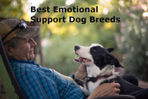 Best Emotional Support Dog Breeds