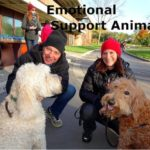 Emotional Support Animal – Support dogs & Cats