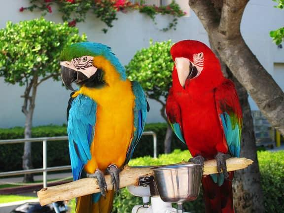Types of Parrots Bird Species – Pet Parrot