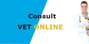 Book Online Vet Consultation