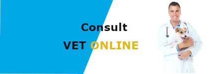 online vet consultation