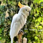 Parrot care and Types of Parrots