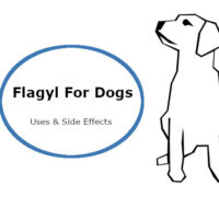Flagyl for dogs: Uses, Dosage & Side Effects