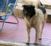 Heinz 57 Dog breed information