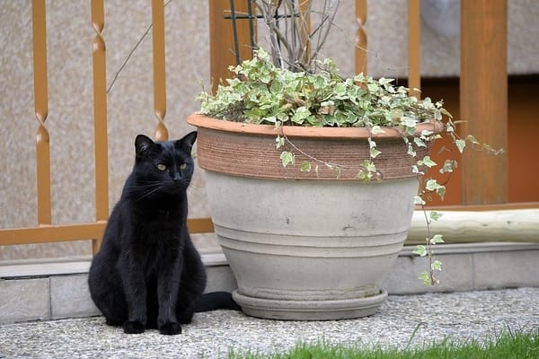 Read more about the article 10 Indoor Plants that are Safe for Cats