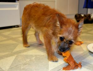 Read more about the article 7 Amazing Benefits of Sweet Potatoes For Dogs