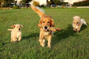 Read more about the article Tips For Happy Tails, Make Pets Happy